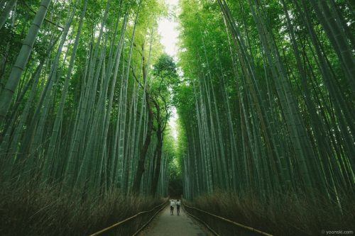 Kyoto, Kobe, Japan, 20130806-4