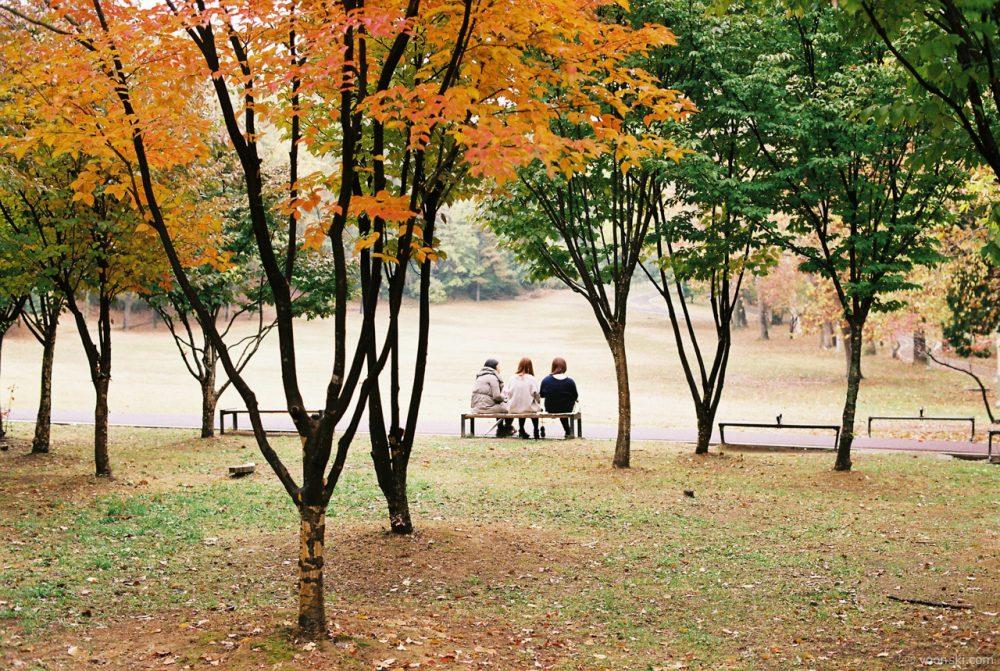 Seoul, Korea, 20131102