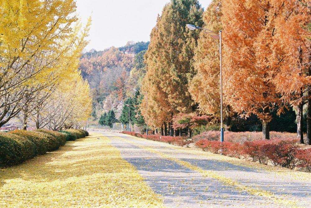 Andong, Korea, 20141109-2